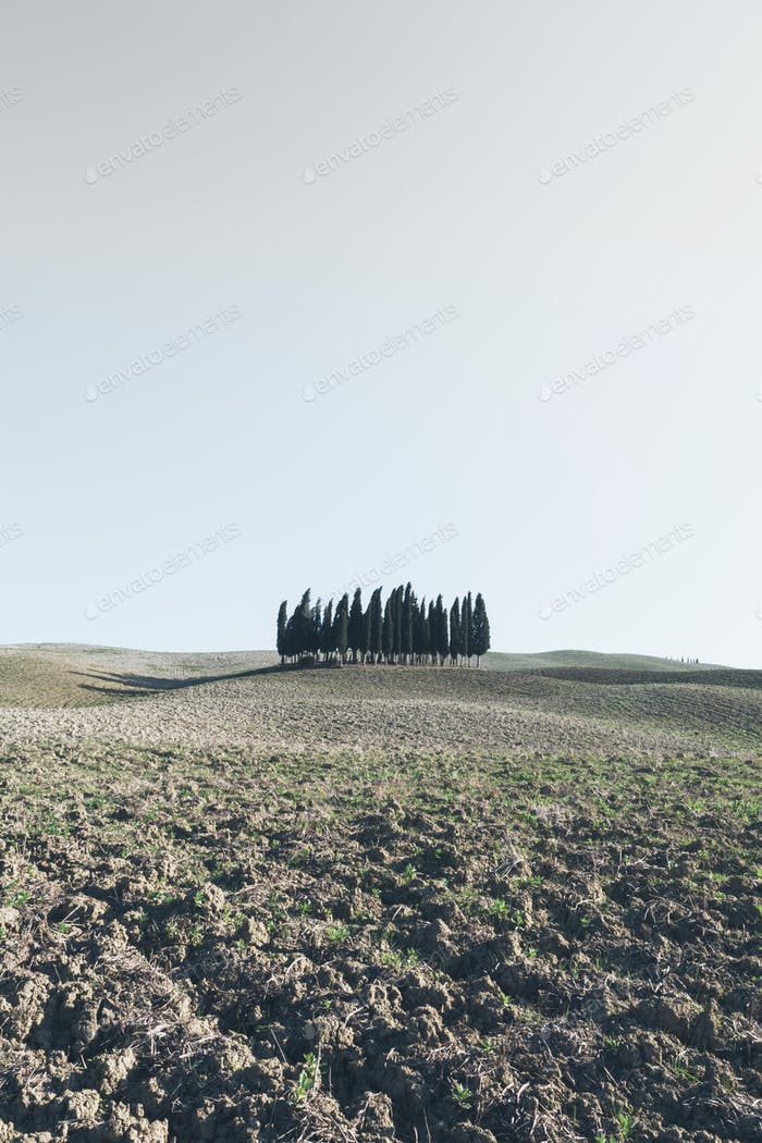 A Tuscan landscape, ploughed fields and view to a small rise and a grove of cypress trees.
