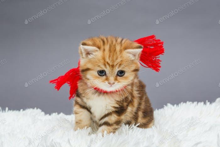 Little  kitten  in a red scarf