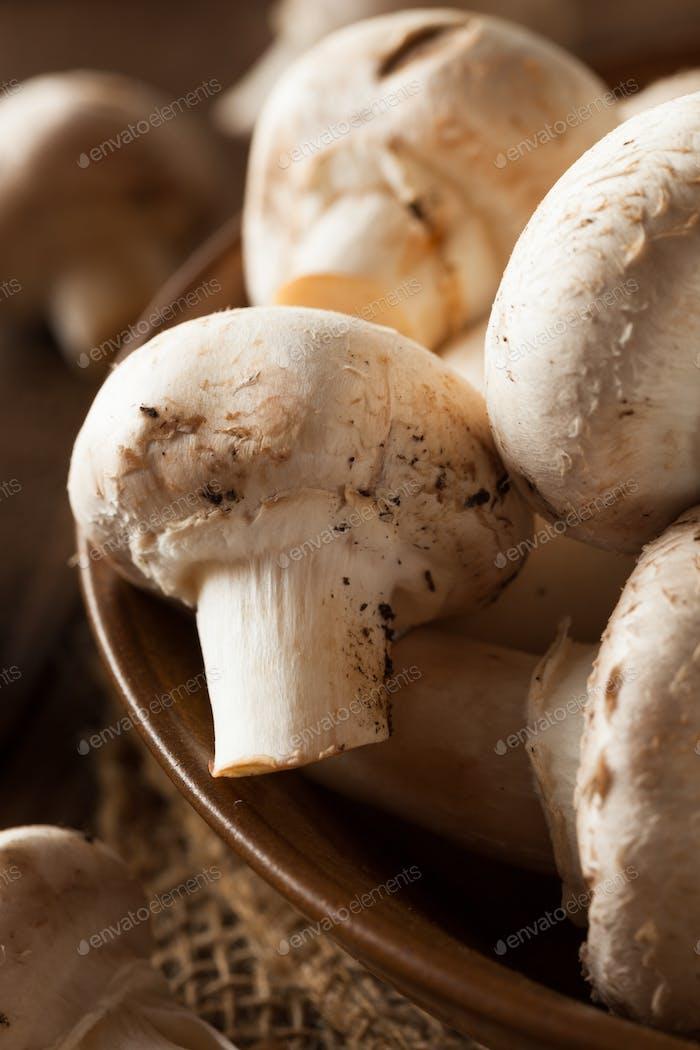 Raw Organic White Mushrooms