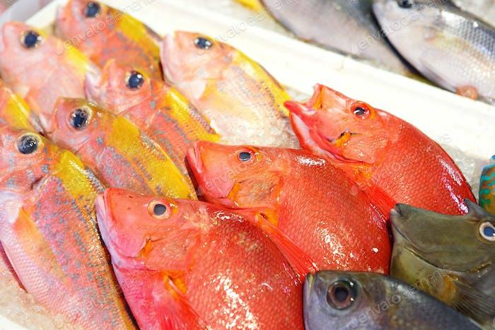 Fisch zum Verkauf