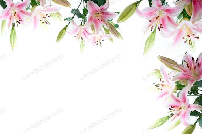 Lilie Blumen Zusammensetzung Rahmen