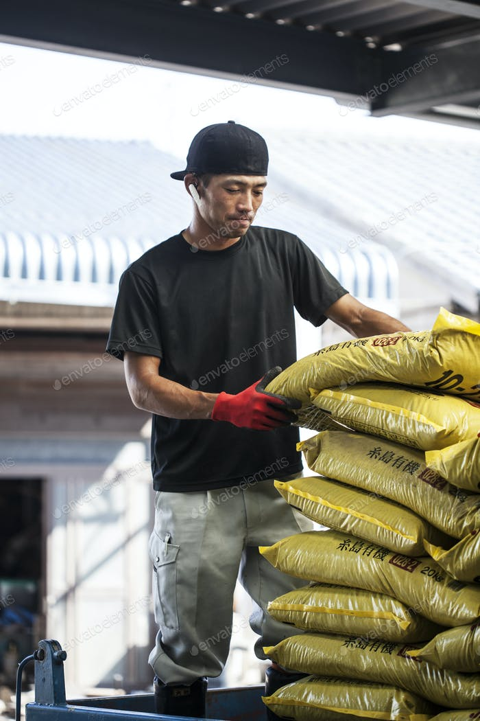 Japanese farmer wearing black cap stacking yellow plastic sacks.