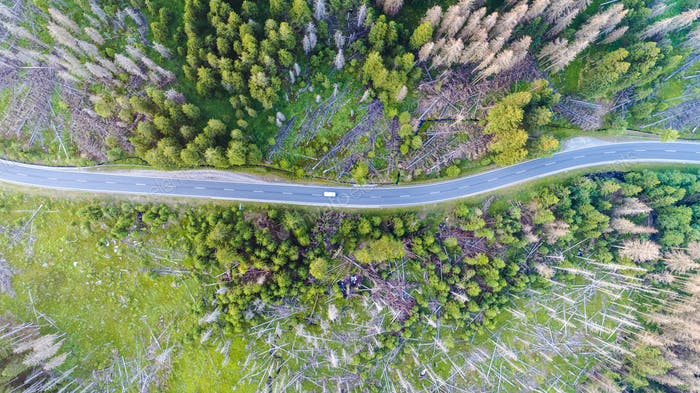 Aerial view of a country road with a car in the forest