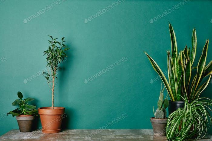Verschiedene Pflanzen in Blumentöpfen auf grünem Hintergrund