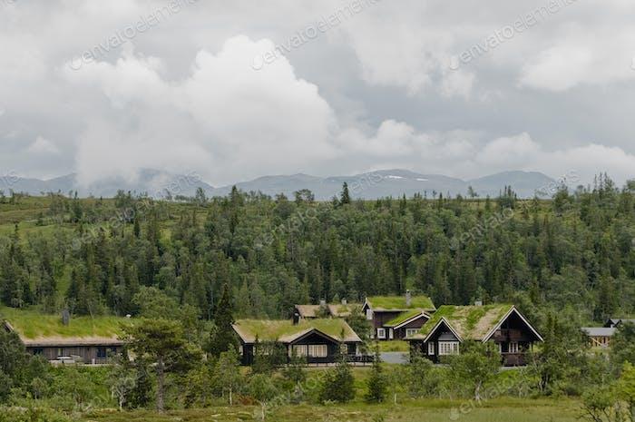 Häuser mit Gras auf Dächern durch Wald