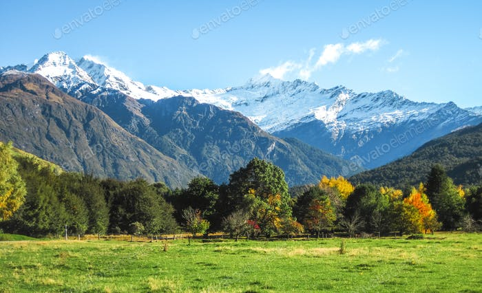 Green Grassy Fields and Snowcapped Peaks in New Zealand