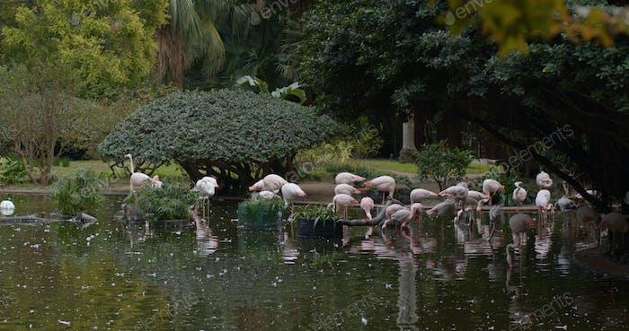 Pink flamingos at the zoo