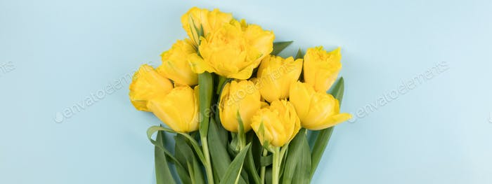 Yellow tulips flowers .Symbol of spring.Mother's Day, Birthday, Valentine's Day.