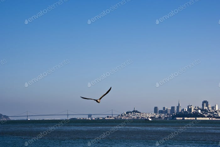 Seagull Flying Over San Francisco Bay