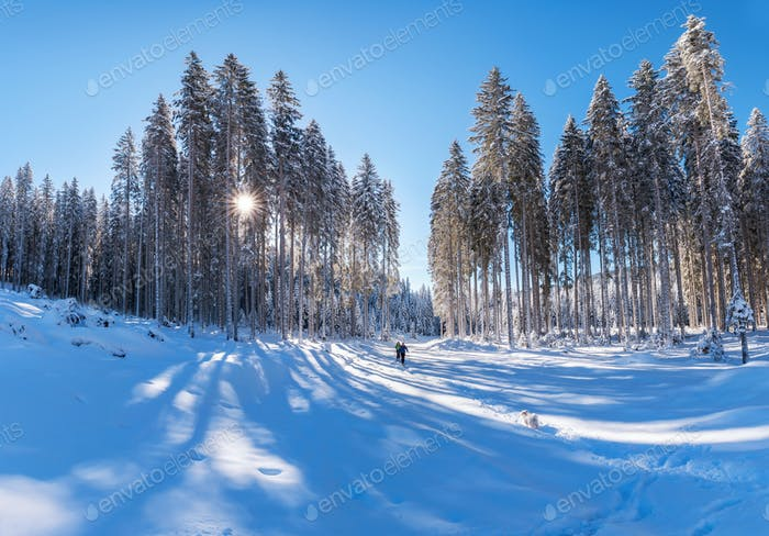 Hikers in the winter forest