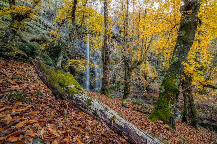 A waterfall and chestnut trees