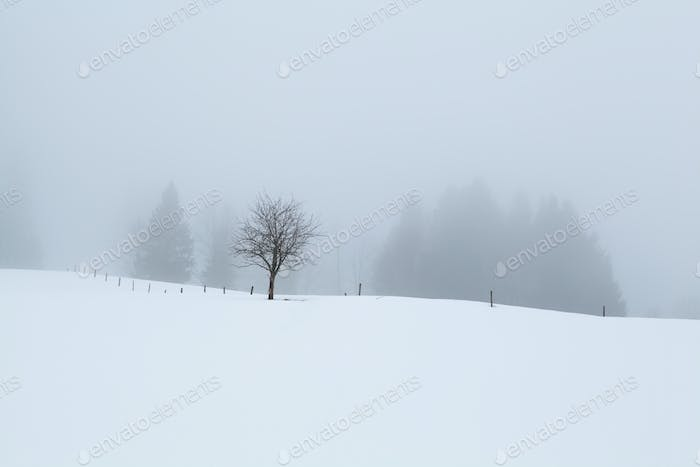 foggy morning on snowy hills in winter
