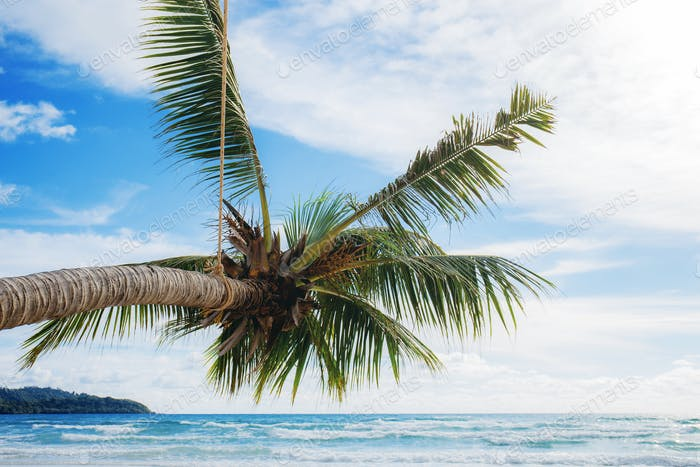 Palm tree at the sea