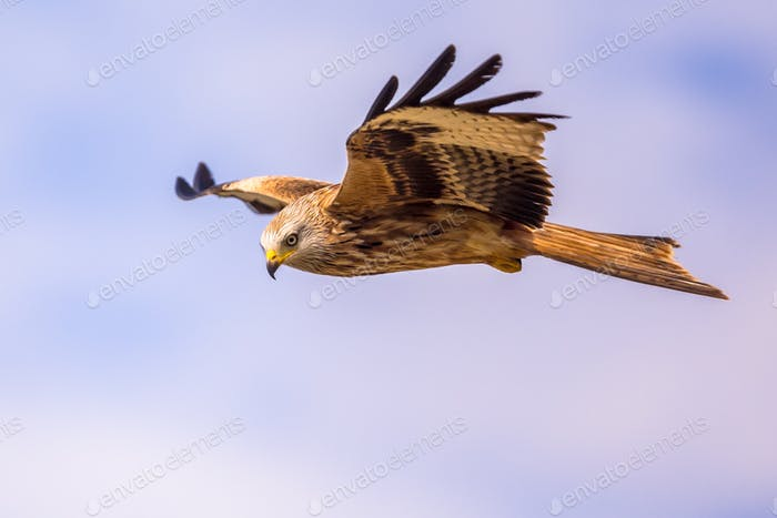 Flying red kite against blue sky