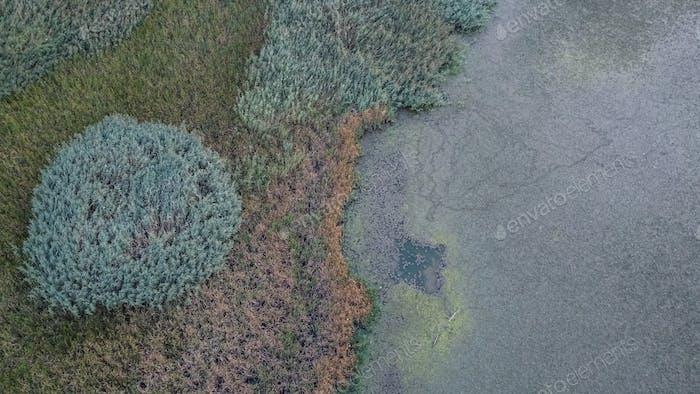 Vegetation on Lake Aerial View