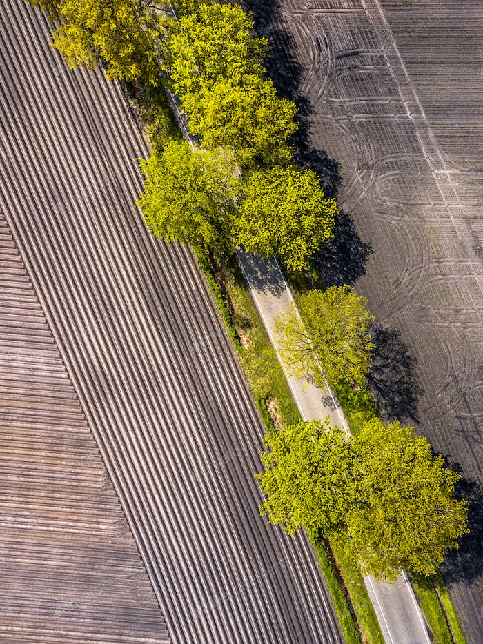 Sown potatoe field aerial
