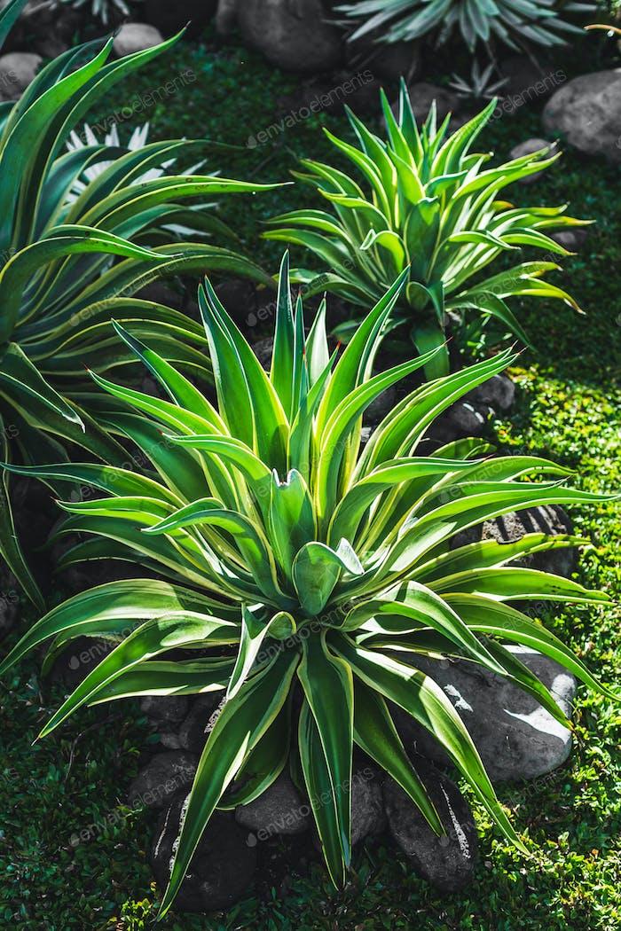 Tropical plants in Bali garden