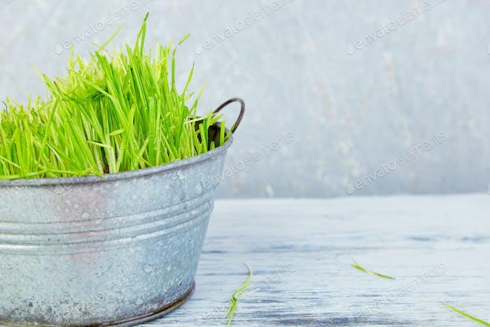 Spring concept. Grass in flowerpot