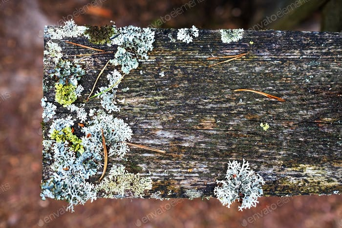 Old wood horizontal plank with lichen and scratches background for design and decoration.