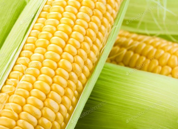 cobs of corn