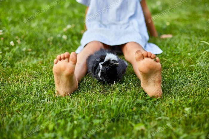A little girl play with Black Guinea pig sitting outdoors in summer