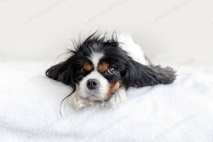 Портрет забавной собаки
