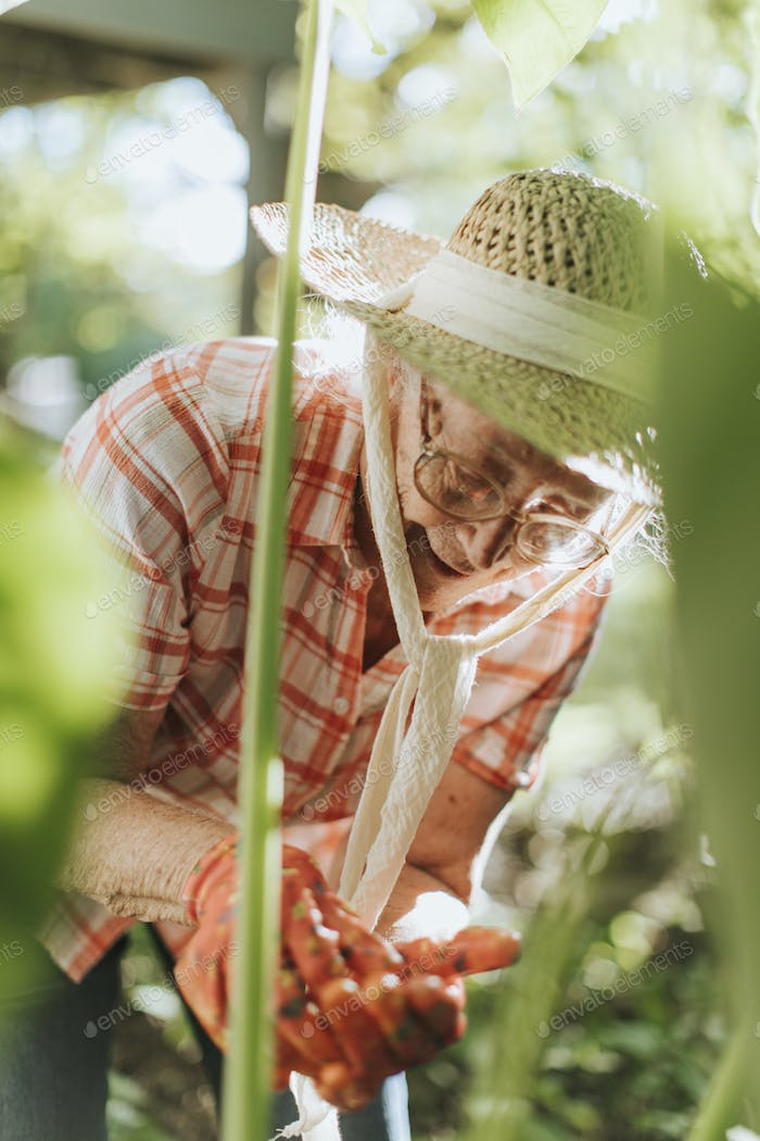 Senior woman tending to the plants in her garden