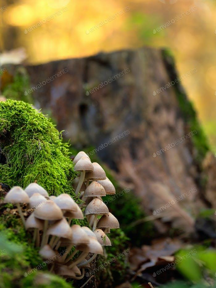 Mushrooms on a trunk