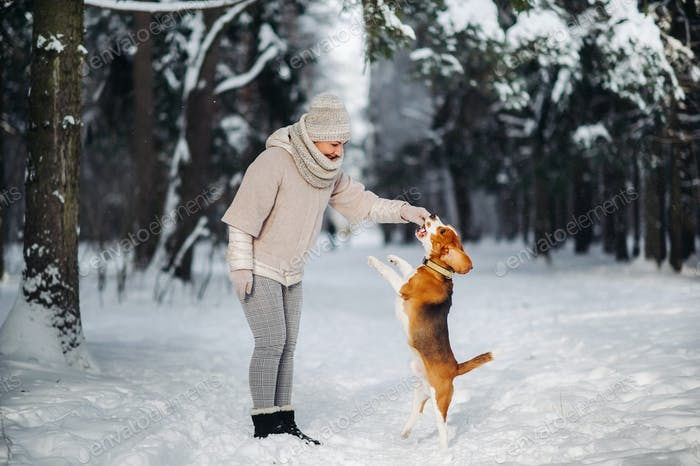English Beagle with a girl playing in the winter forest.The owner plays with the dog jumping up