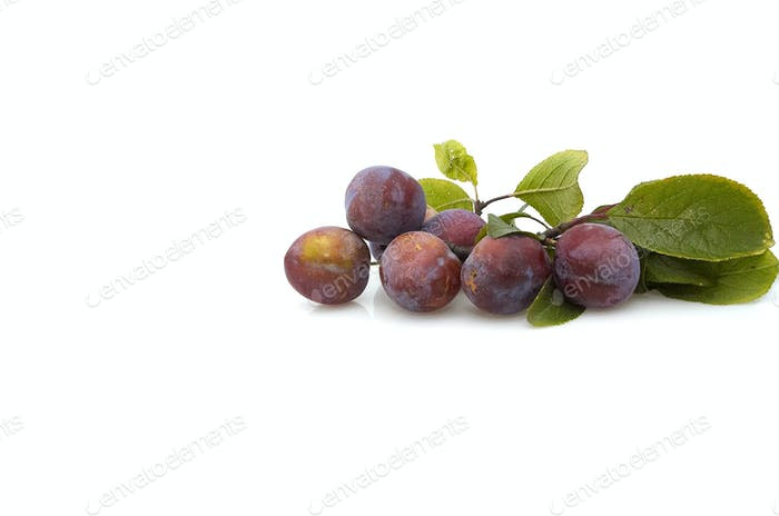 Fresh plum s on white background.