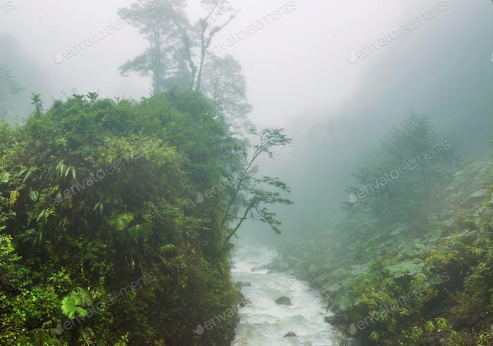 Foggy jungle