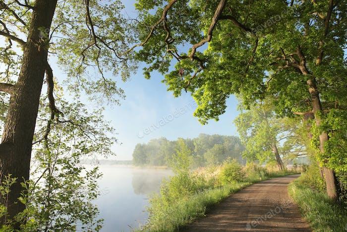 Rural landscape on a foggy spring morning