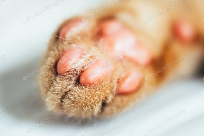 Tiny paws of ginger kitten