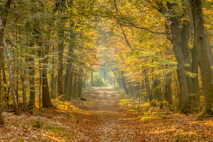 Walkway in hazy autumn forest