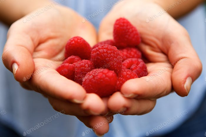 Female hands holding fresh raspberries