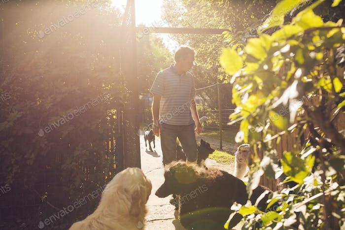 Paseador de perros con perros en el parque