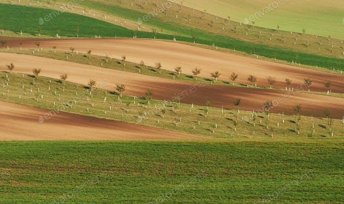 Schöne Natur. Linie von frischen Bäumen auf den grünen landwirtschaftlichen Feldern tagsüber