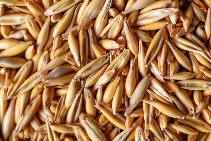 Natural oat grains for background