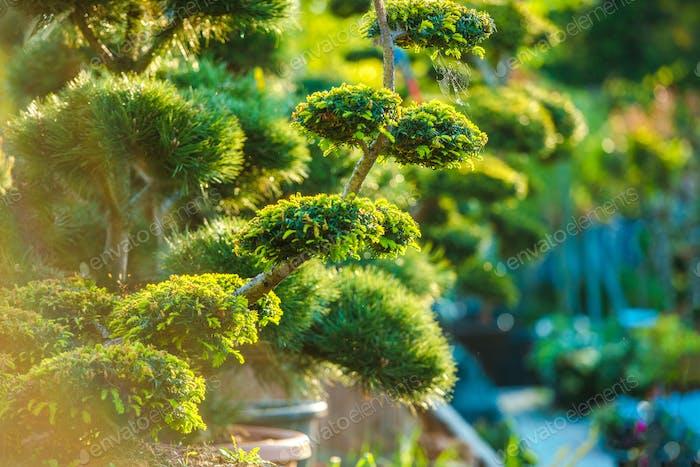 Topiary Art Plantas de jardín