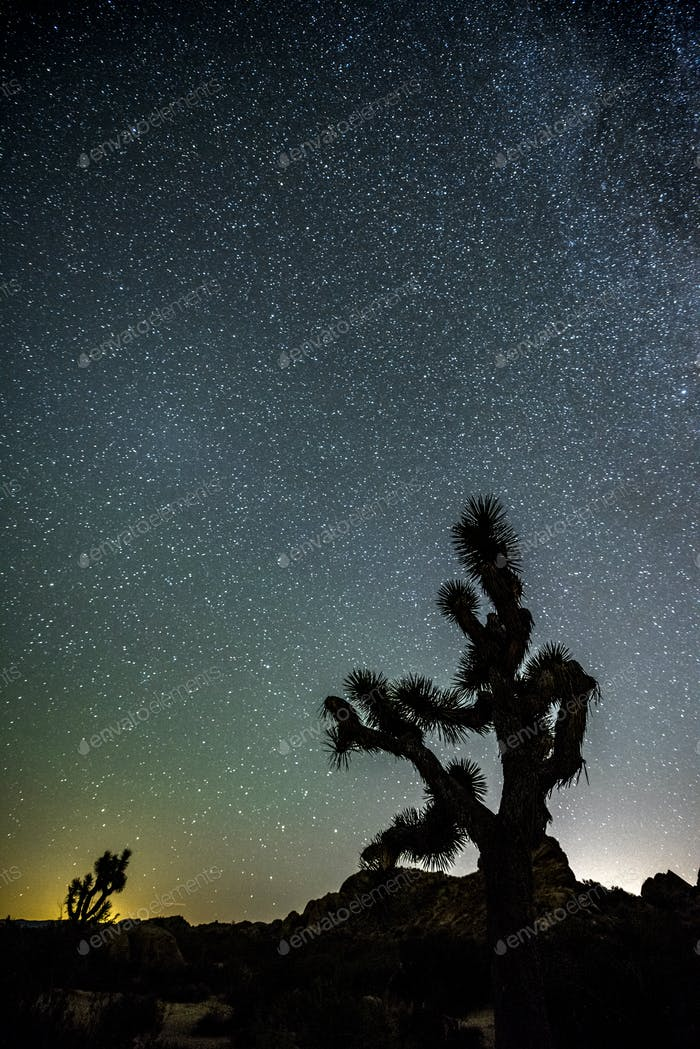 Stars in Joshua Tree