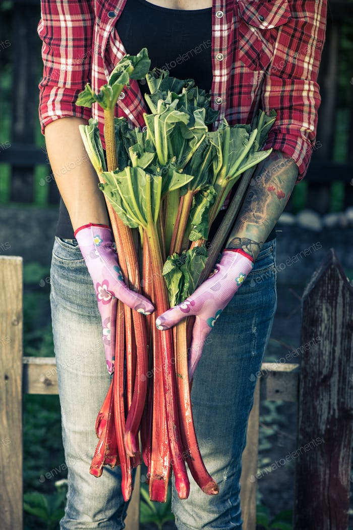 Tattooed authentic gardener holding rhubarb
