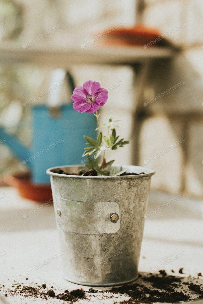 Pink flower in a metallic flower pot
