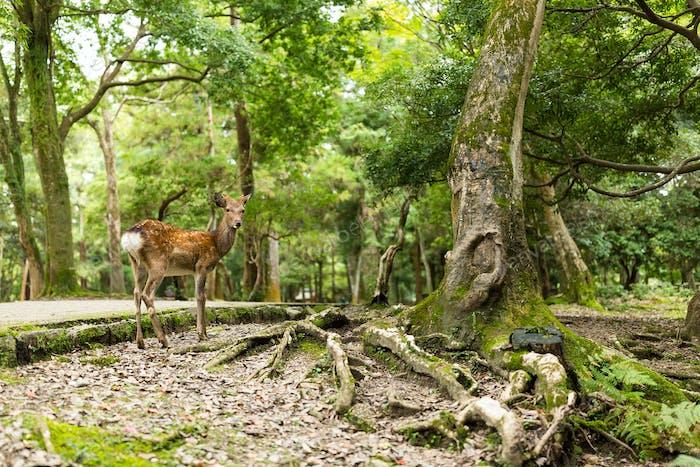 Прекрасный олень в парке