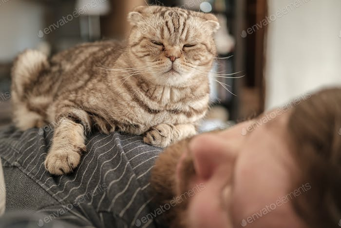 Cute Scottish Fold cat lies on chest of its sleeping owner