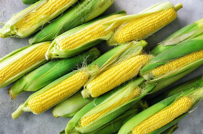 Fresh corn on cobs on light grey concrete background, closeup, top view, copy space