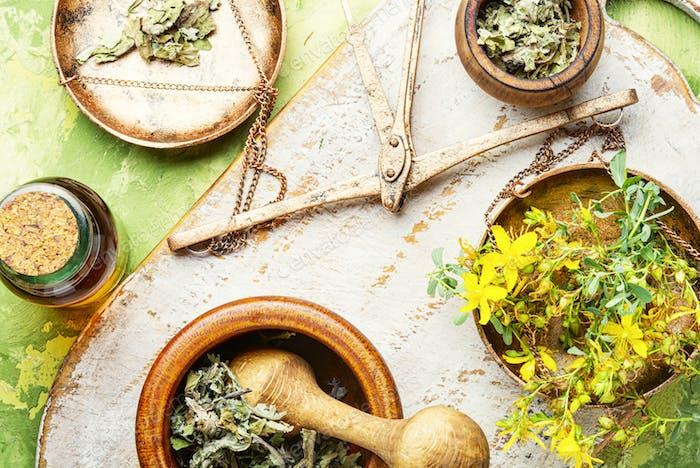 Hypericum medicinal plant