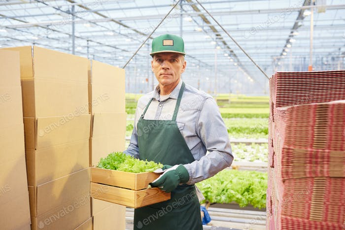 Mature Worker at Vegetable Plantation