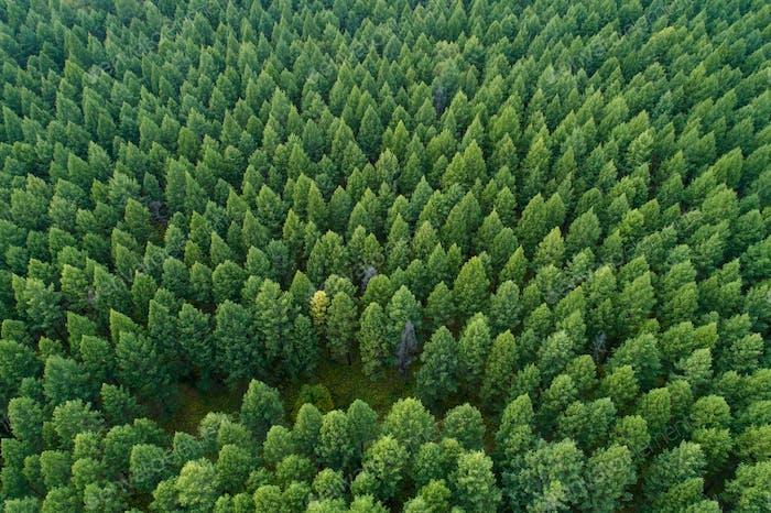 aerial shot of forest landscape