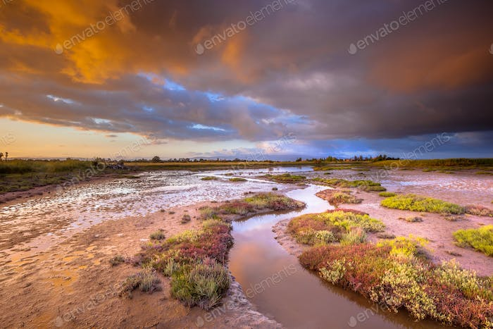 Tidal Channel in Estuary marshland at sunrise