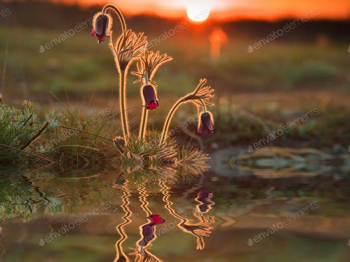 Reflection of beautiful spring flowers and green grass.